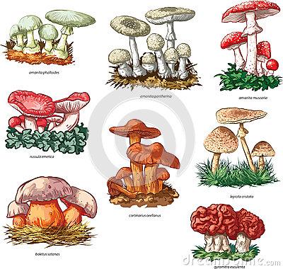 Över 1000 idéer om Giftige Pilze på Pinterest.
