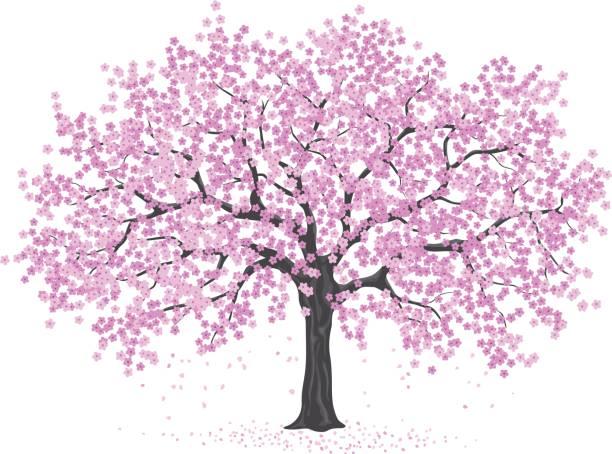 Cherry Blossom Clip Art & Free Cherry Blossom Clip Art.png.