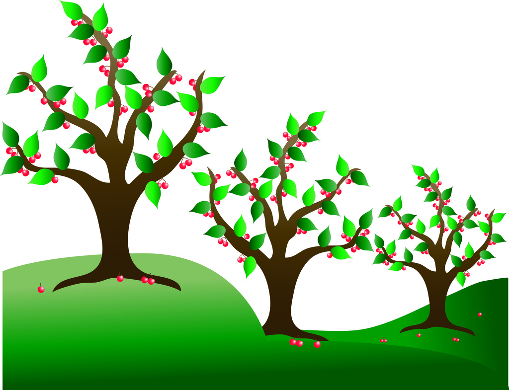 Clip Art Illustration of Cherry Trees in an Orchard.
