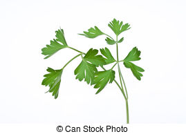 Chervil Clipart and Stock Illustrations. 46 Chervil vector EPS.