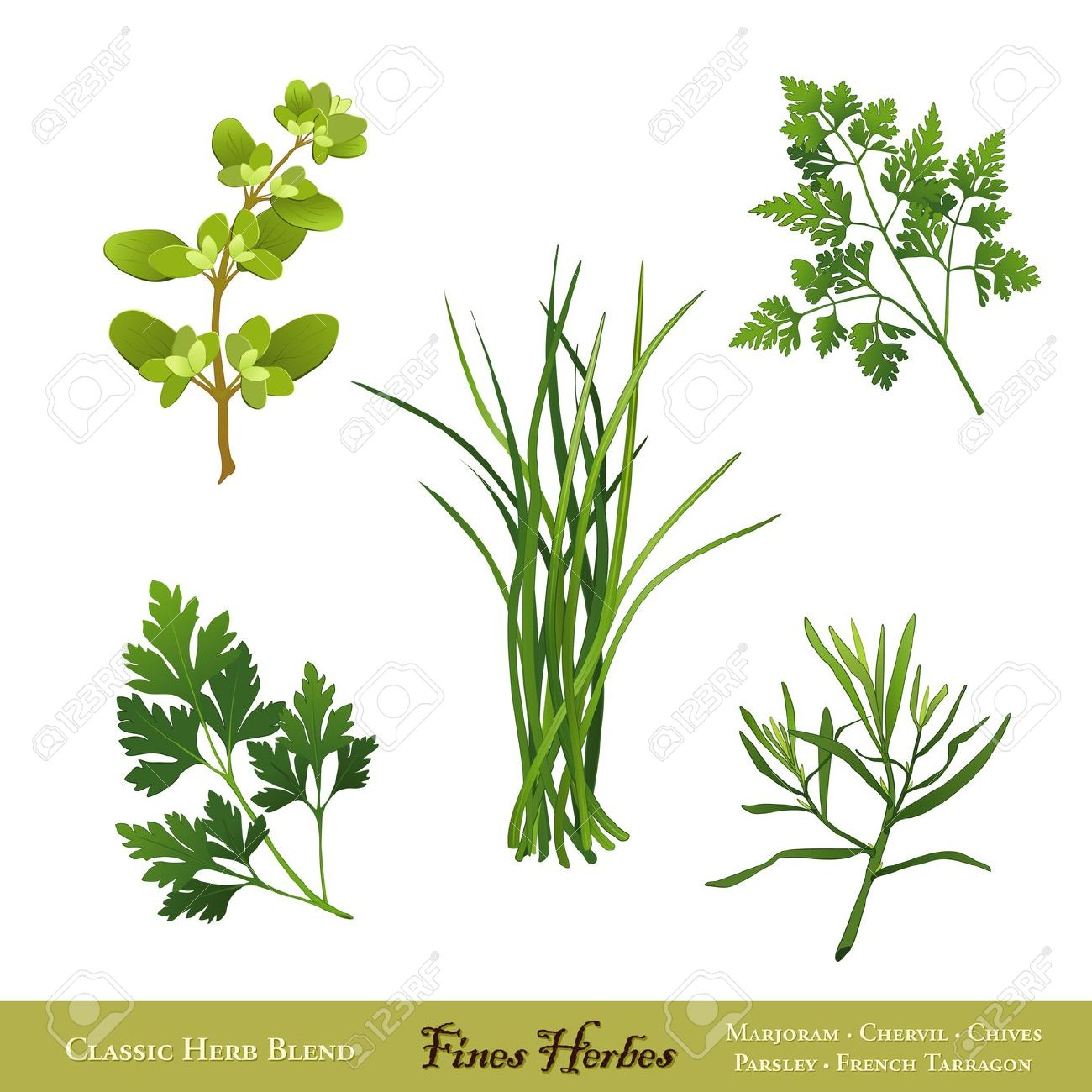 Fines Herbes, Classic French Herb Blend Sweet Marjoram, Chervil.