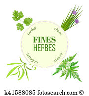 Chervil Illustrations and Clip Art. 7 chervil royalty free.