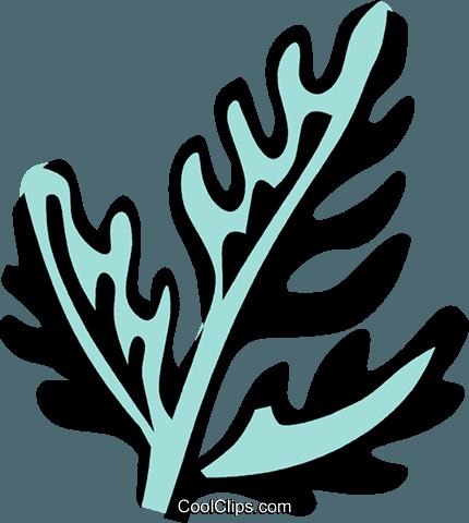 chervil Royalty Free Vector Clip Art illustration.