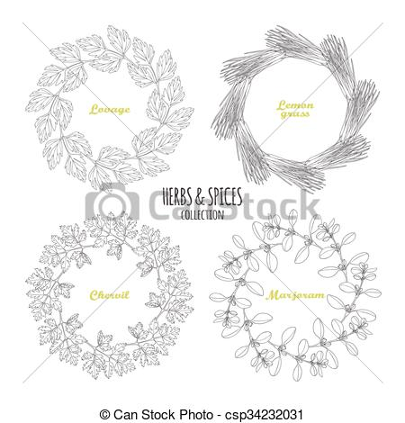 Vectors of Spicy herb circle frames collection. Hand drawn lovage.