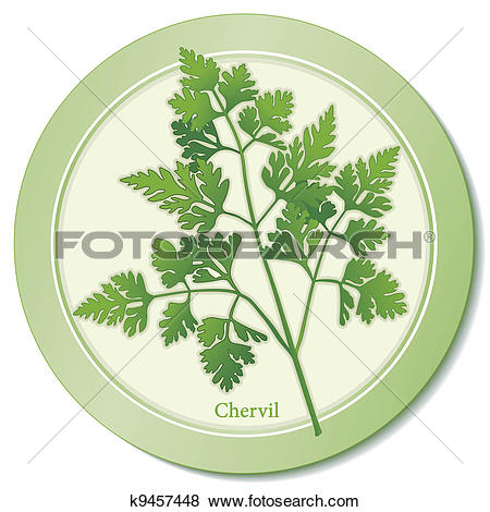 Clip Art of French Chervil Herb Icon k9457448.