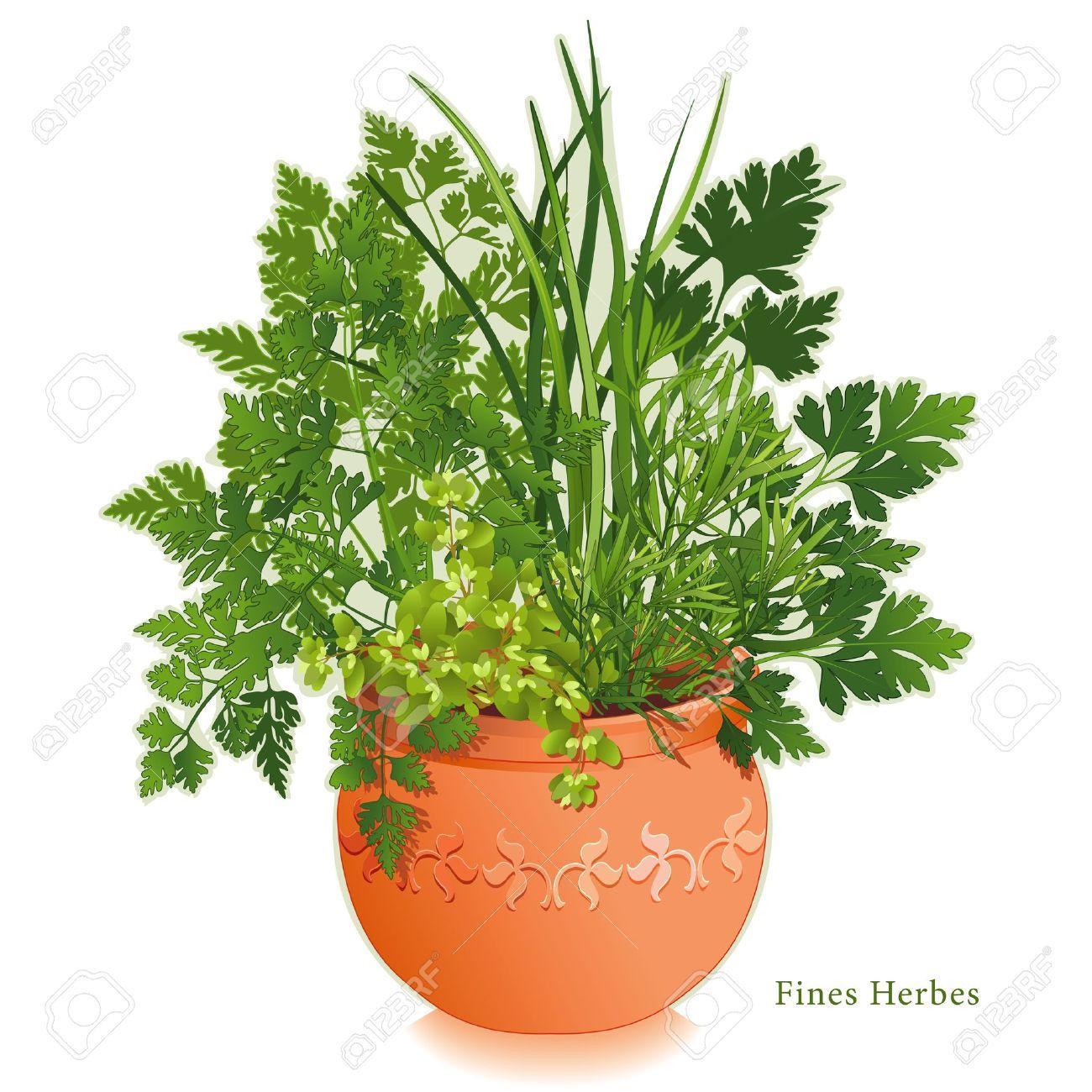 Kitchen Herb Gardens That Will Make Cooking Wonderful: Chervil Clipart