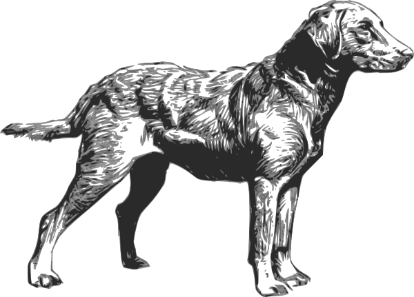 Chesapeake Bay Retriever Clip Art at Clker.com.
