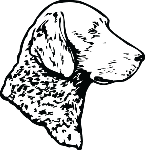 Chesapeake Bay Retriever Dog Head Art For Engraved Products.
