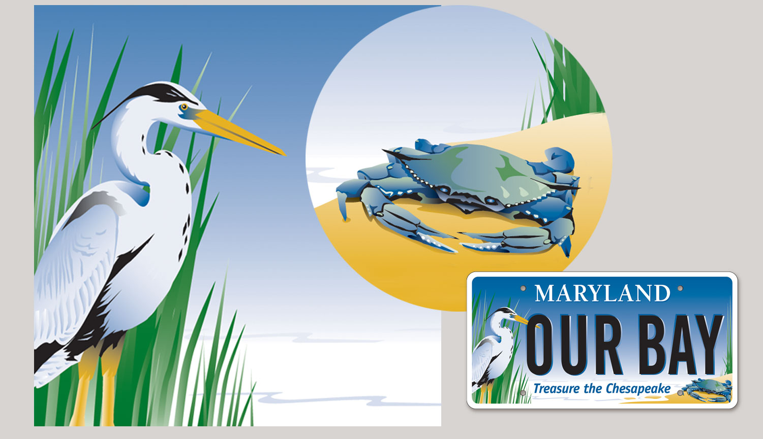 Illustrated the Maryland bay plate for the Chesapeake Bay Trust.