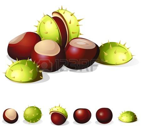 6,316 Chestnut Stock Illustrations, Cliparts And Royalty Free.