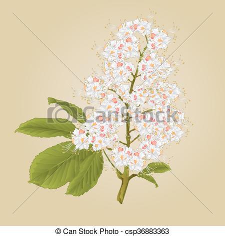 Clip Art Vector of Chestnut tree flower with leaves vector.eps.