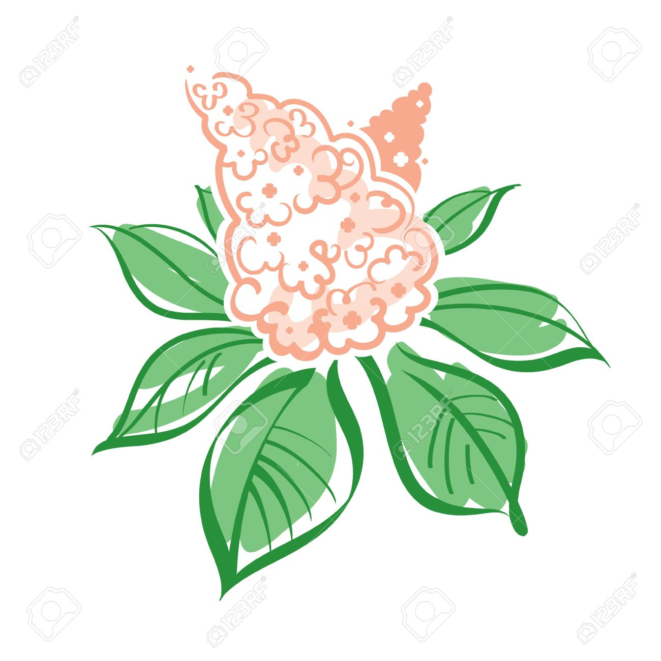 Vector Illustration Of Chestnut Flowers And Leaves Royalty Free.