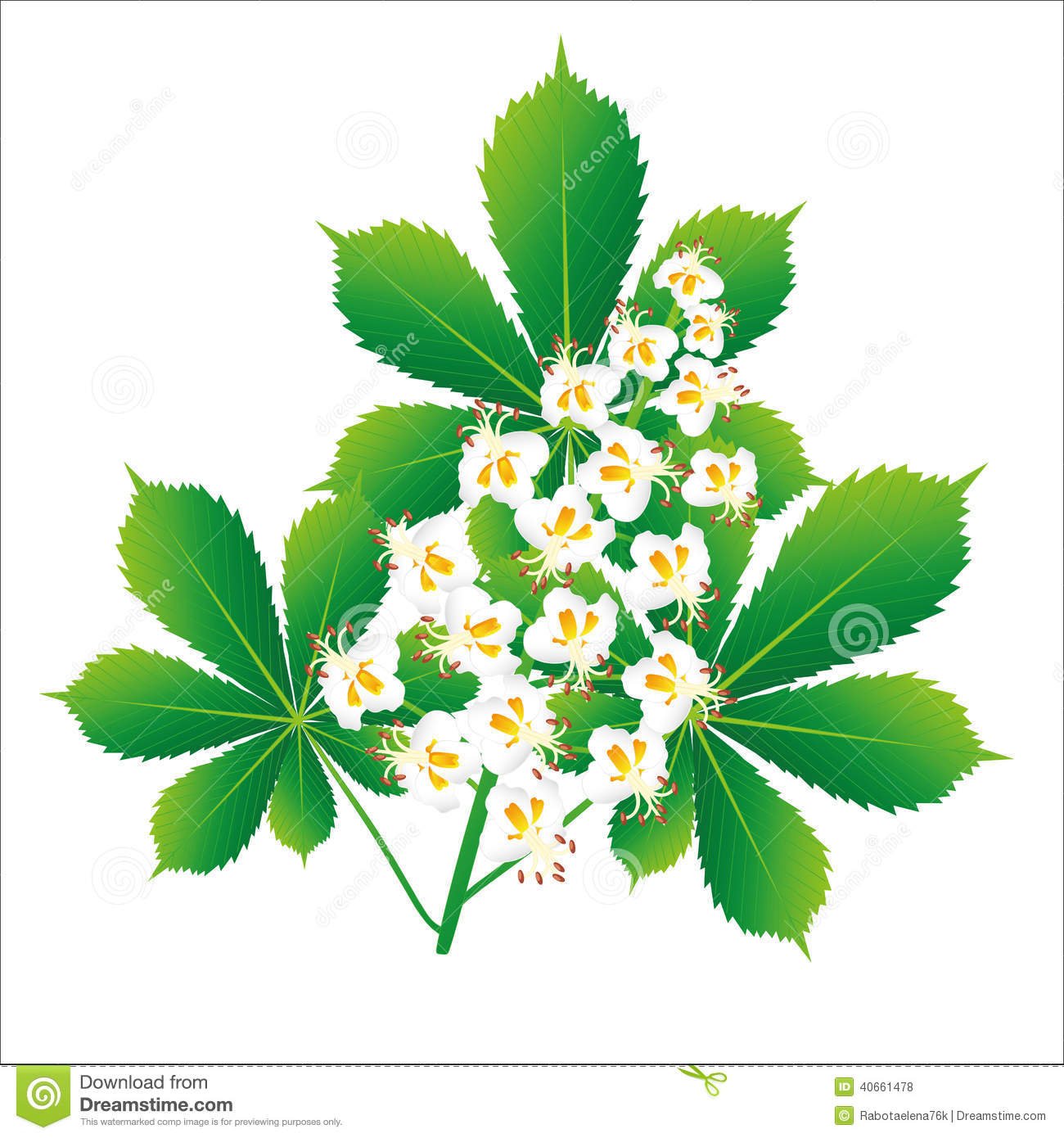 Horse Chestnut Flower Isolated Object Stock Vector.