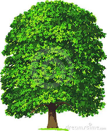 Chestnut Stock Illustrations.