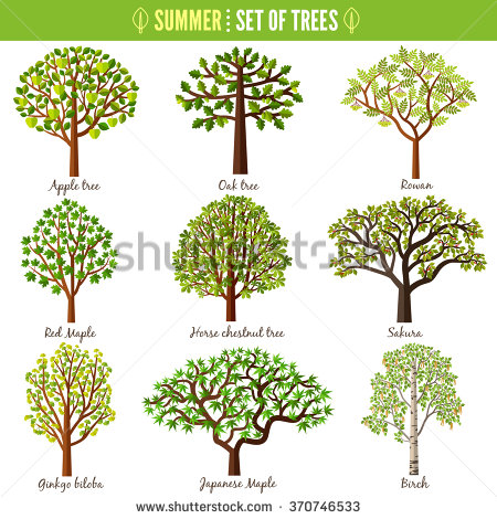 Chestnut Tree Stock Photos, Royalty.