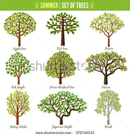 Chestnut Tree Stock Photos, Royalty.