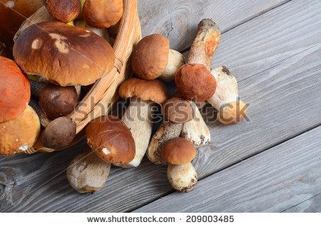 "porcini_mushrooms"" Stock Photos, Royalty."