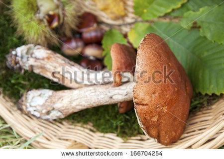 Chestnut boletus Stock Photos, Images, & Pictures.