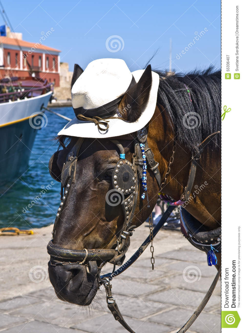 Horse Wearing A Hat Head Closeup Stock Photo.
