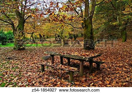 Picture of Recreation area in a Chestnut forest, Asturias, Spain.