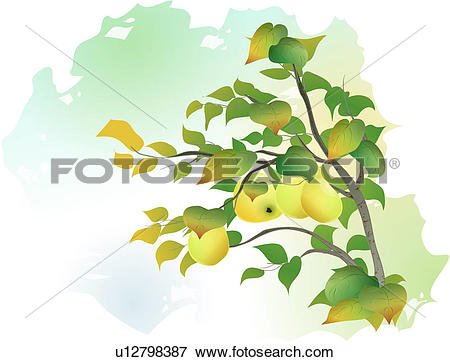 Clip Art of trees, tree, plants, fruit, chinese quince, tree.