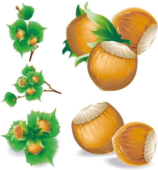Chestnut free vector download (34 Free vector) for commercial use.
