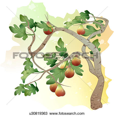 Chestnut fruit clipart #5