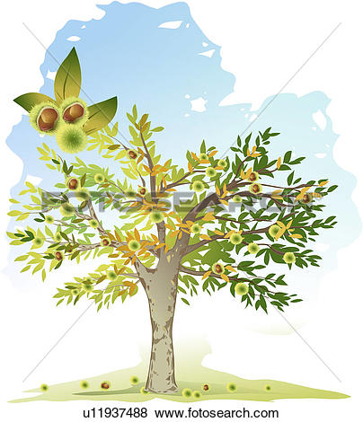 Clip Art of season, tree, chestnut, fruit, chestnut tree, fall.