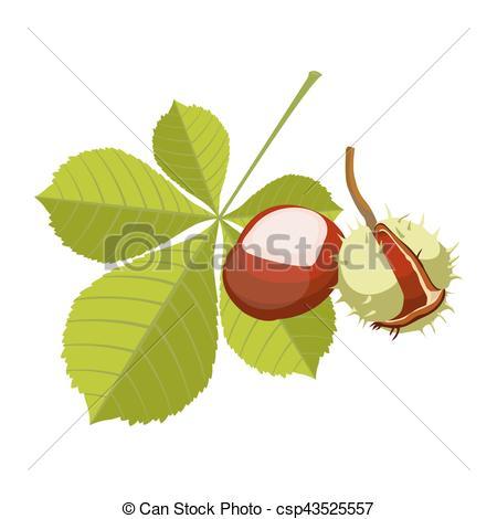 Clipart Vector of Chestnut isolated on white background. Vinous.