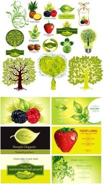 Chestnut fruit clipart #6