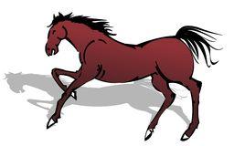 Horse Chestnut Stock Illustrations.
