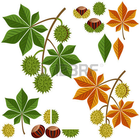 5,059 Chestnut Leaf Stock Vector Illustration And Royalty Free.