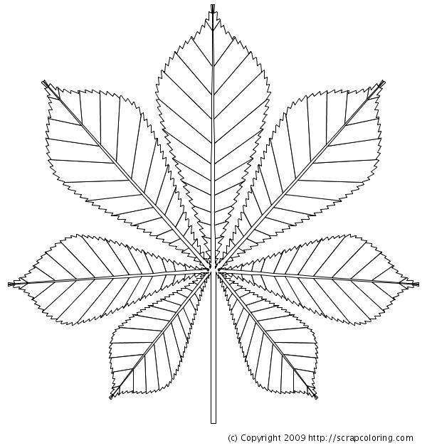 kastanienblatt Zeichnung.
