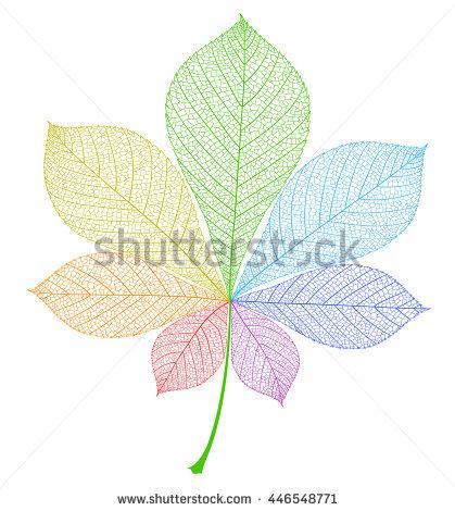Horse Chestnut Leaf Stock Photos, Royalty.