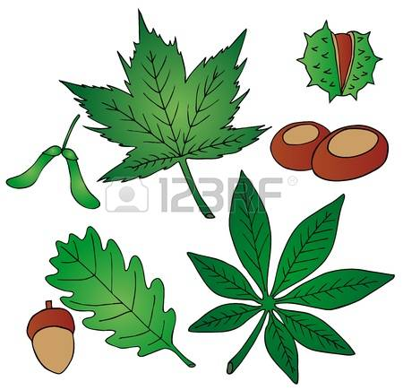 5,264 Chestnut Leaf Stock Vector Illustration And Royalty Free.