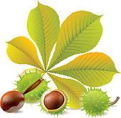 Chestnut Leaf Clip Art.