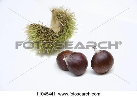 Stock Photography of Three chestnuts and open, green chestnut.