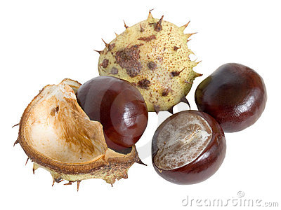 Horse Chestnut Shell Stock Photos, Images, & Pictures.