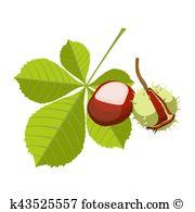 Chestnut shell Clipart Royalty Free. 49 chestnut shell clip art.