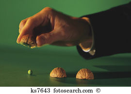Chestnut shell Images and Stock Photos. 3,295 chestnut shell.
