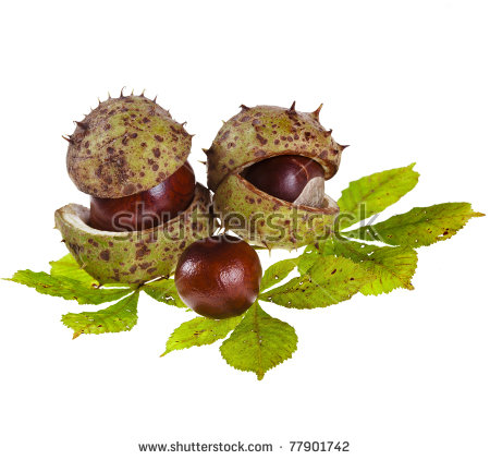 Horse Chestnut Tree Stock Photos, Royalty.