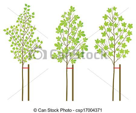 Vectors Illustration of Chestnut, maple and birch tree plants.
