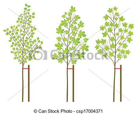 Vectors Illustration of Chestnut, maple and birch tree plants.