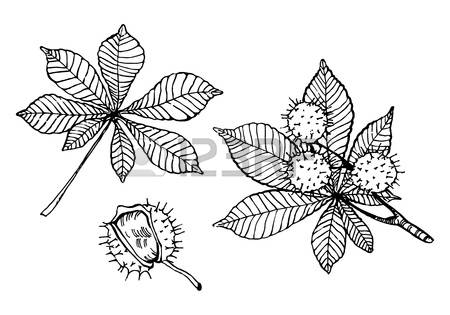 4,183 Chestnut Tree Stock Illustrations, Cliparts And Royalty Free.