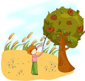 Fruit Chestnut Tree Stock Illustrations.