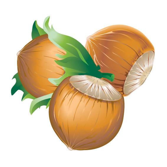 5 chestnuts vector Free Vector / 4Vector.