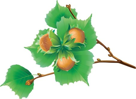 Chestnuts clipart #8