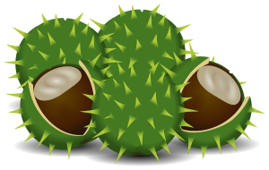 chestnuts clipart.