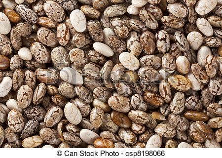 Stock Image of chia seeds at 2x life.