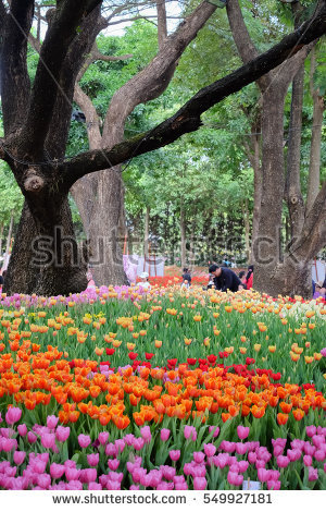 Chiang Rai Flower Stock Photos, Royalty.